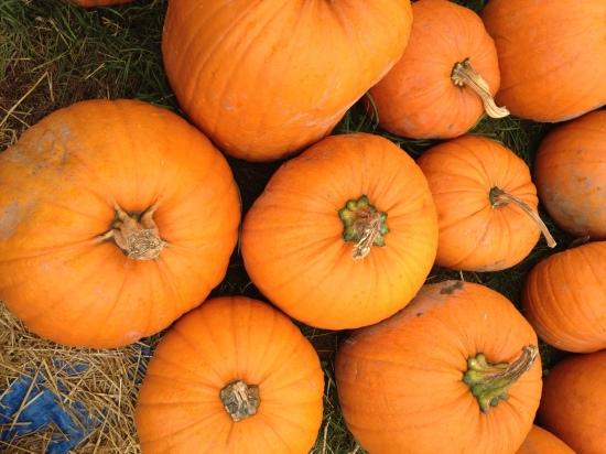 tims-pumpkin-2