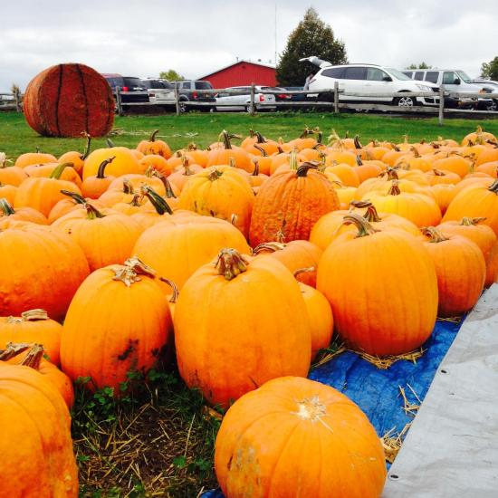 tims-pumpkin-patch