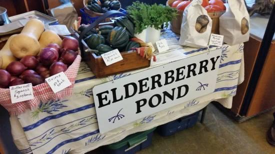 elderberry-pond-2